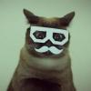 mustache_cat